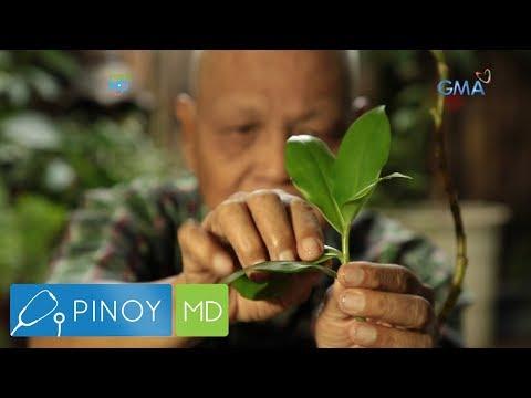 Pinoy MD: Insulin plant, epektibo bang lunas sa diabetes?